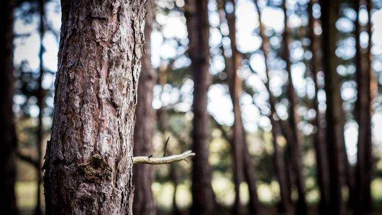 Baum, Rinde, Wald