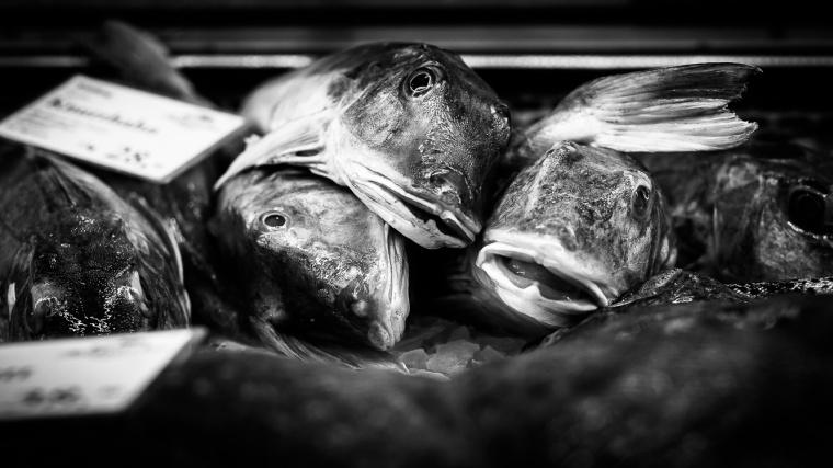 Knurrhahn, Fisch, Fischhändler, Knurrhähne