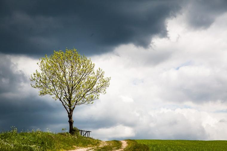 Dittersdorfer Höhe, Sächsische Schweiz, Baum, Feldweg, Wolken, Regenwolken