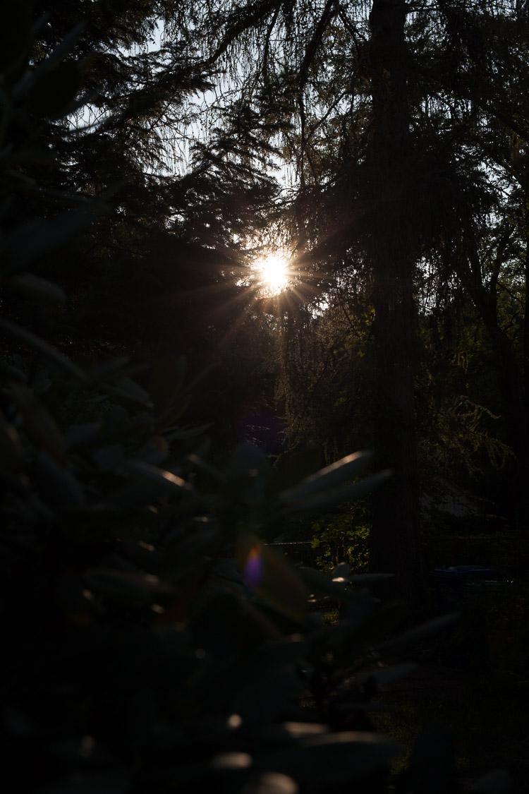 unbearbeitet, Sonnenuntergang, Sonne, Lärche, Fichte, Rhododendron, Garten, Abend