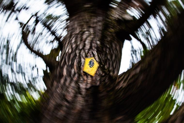 Baum, Biotop, Naturschutz