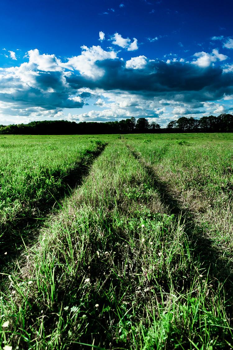 Feldweg, Wiese, Wald, Himmel, Landschaft