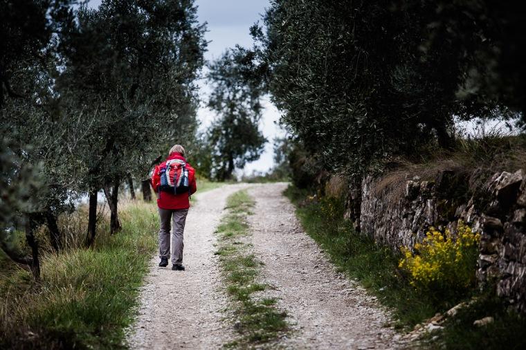 Wanderung, Wanderin, Toskana, Feldweg, Olive