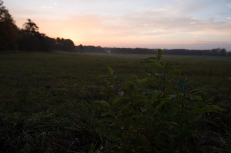 Sonnenuntergang, Wiese, Bildbearbeitung
