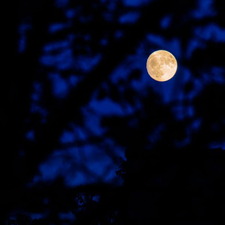 Mond, Vollmond, Mondgesicht, Himmel, Baum